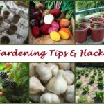 Gardening-Tips-and-Hacks