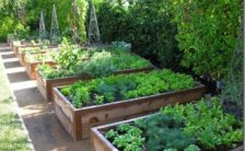 designing a raised bed garden