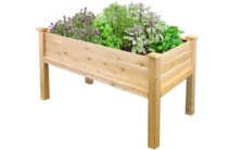 what to plant in a raised garden bed