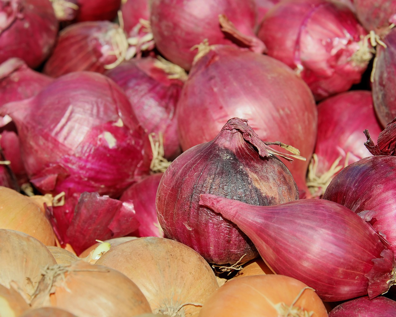 when to plant onions in pa
